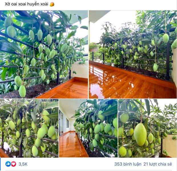 Những cây xoài ra hoa kết trái khó đỡ nhất Việt Nam, nhiều phen gia chủ khóc ròng vì tình thế tiến thoái lưỡng nan - Ảnh 6.