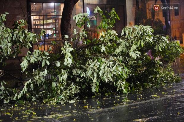 Hàng loạt cây xanh gãy đổ khắp đường phố Hà Nội sau cơn mưa giông tầm tã - Ảnh 10.