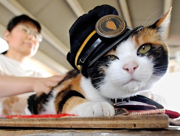 Chỉ nhờ một cô mèo hoang, công ty Nhật Bản lãi to 280 tỷ, thoát khỏi cảnh phá sản trong gang tấc - Ảnh 2.