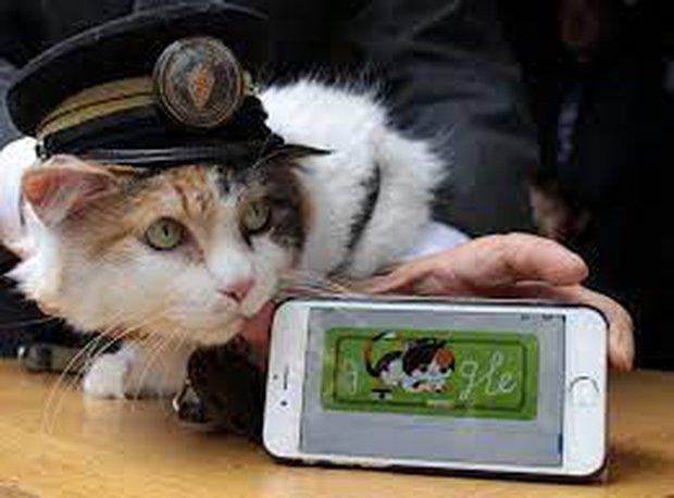 Chỉ nhờ một cô mèo hoang, công ty Nhật Bản lãi to 280 tỷ, thoát khỏi cảnh phá sản trong gang tấc - Ảnh 5.