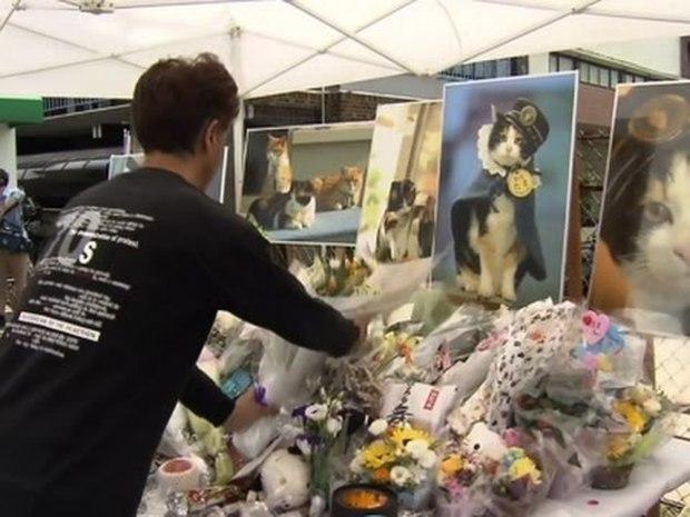 Chỉ nhờ một cô mèo hoang, công ty Nhật Bản lãi to 280 tỷ, thoát khỏi cảnh phá sản trong gang tấc - Ảnh 15.