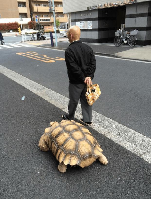 Ông lão người Nhật nuôi con rùa nặng 70kg, quãng đường 5 phút đi mất 3 tiếng: Sống chậm lại, cuộc đời quả thực đáng yêu hơn bạn nghĩ - Ảnh 11.