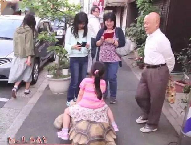 Ông lão người Nhật nuôi con rùa nặng 70kg, quãng đường 5 phút đi mất 3 tiếng: Sống chậm lại, cuộc đời quả thực đáng yêu hơn bạn nghĩ - Ảnh 16.
