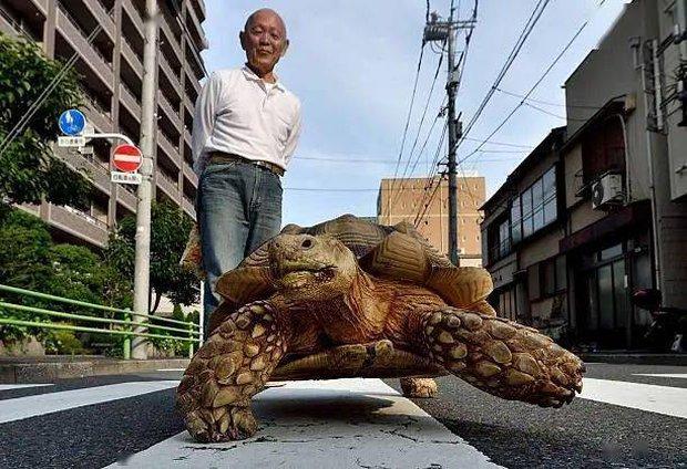 Ông lão người Nhật nuôi con rùa nặng 70kg, quãng đường 5 phút đi mất 3 tiếng: Sống chậm lại, cuộc đời quả thực đáng yêu hơn bạn nghĩ - Ảnh 18.