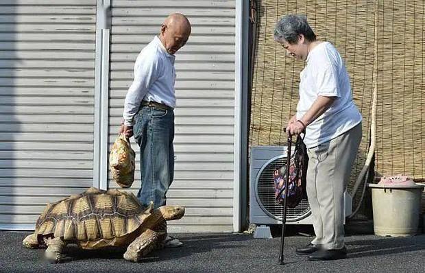 Ông lão người Nhật nuôi con rùa nặng 70kg, quãng đường 5 phút đi mất 3 tiếng: Sống chậm lại, cuộc đời quả thực đáng yêu hơn bạn nghĩ - Ảnh 21.