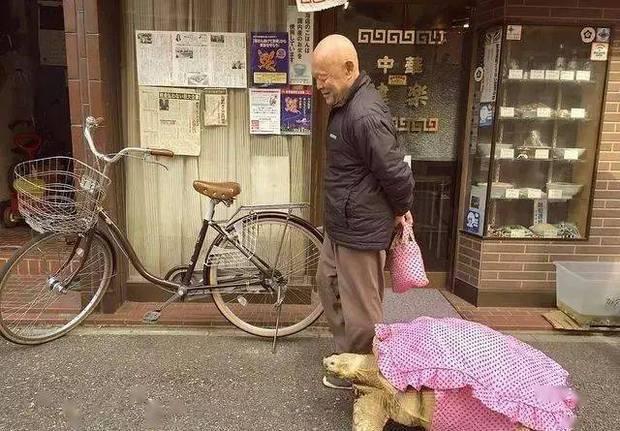 Ông lão người Nhật nuôi con rùa nặng 70kg, quãng đường 5 phút đi mất 3 tiếng: Sống chậm lại, cuộc đời quả thực đáng yêu hơn bạn nghĩ - Ảnh 9.