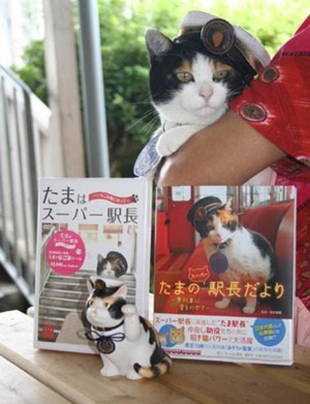 Chỉ nhờ một cô mèo hoang, công ty Nhật Bản lãi to 280 tỷ, thoát khỏi cảnh phá sản trong gang tấc - Ảnh 13.