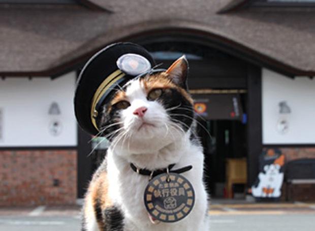 Chỉ nhờ một cô mèo hoang, công ty Nhật Bản lãi to 280 tỷ, thoát khỏi cảnh phá sản trong gang tấc - Ảnh 3.