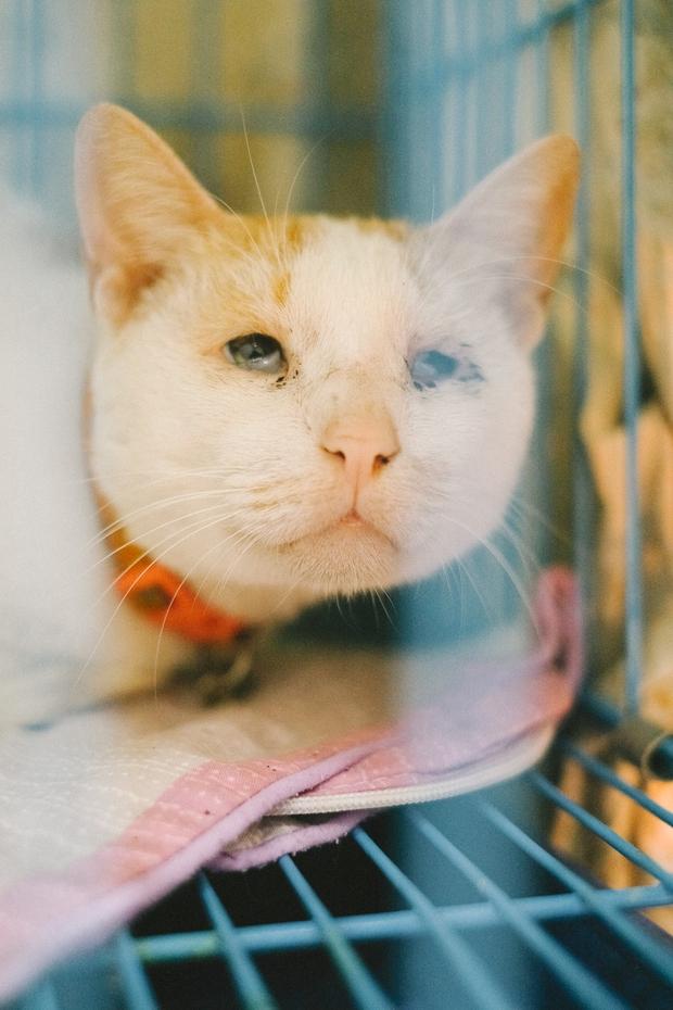 Hành trình của một chú chó hoang từng bị đánh, bắt đến bến đỗ trong ngôi nhà hạnh phúc cho chó mèo ở Hà Nội - Ảnh 17.