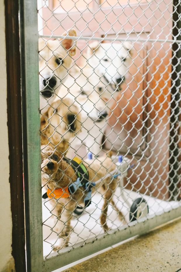 Hành trình của một chú chó hoang từng bị đánh, bắt đến bến đỗ trong ngôi nhà hạnh phúc cho chó mèo ở Hà Nội - Ảnh 15.