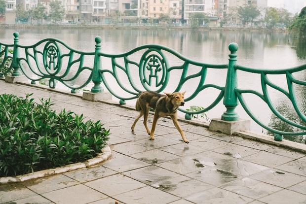 Hành trình của một chú chó hoang từng bị đánh, bắt đến bến đỗ trong ngôi nhà hạnh phúc cho chó mèo ở Hà Nội - Ảnh 1.