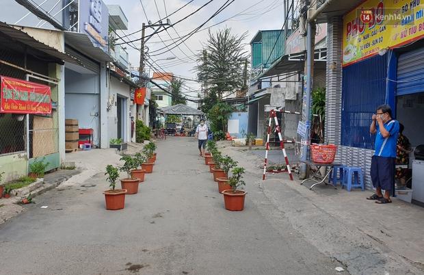 Góc cưng xỉu: Người dân Sài Gòn trong khu cách ly thi trồng cây táo, chờ táo nở hoa - Ảnh 4.