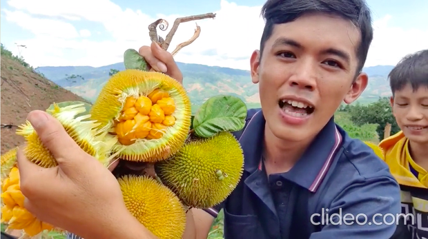 Việt Nam có những loại quả rừng dù mọc dại nhưng giá bán không hề rẻ tí nào, hương vị thì khác xa anh chị em cùng dòng họ - Ảnh 1.