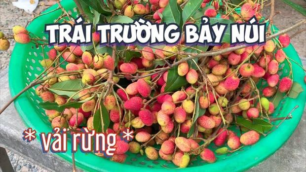 Việt Nam có những loại quả rừng dù mọc dại nhưng giá bán không hề rẻ tí nào, hương vị thì khác xa anh chị em cùng dòng họ - Ảnh 9.