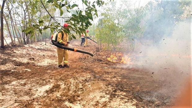 Rừng phòng hộ ven biển bốc cháy dữ dội, hàng trăm người nỗ lực dập lửa - Ảnh 2.