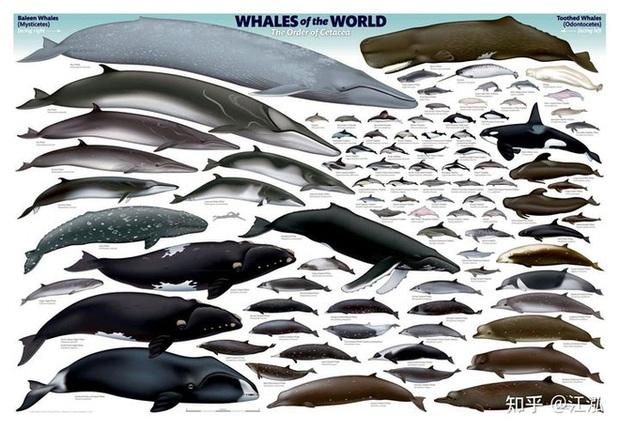 Tại sao lỗ mũi của cá voi lại nằm trên đỉnh đầu? - Ảnh 1.