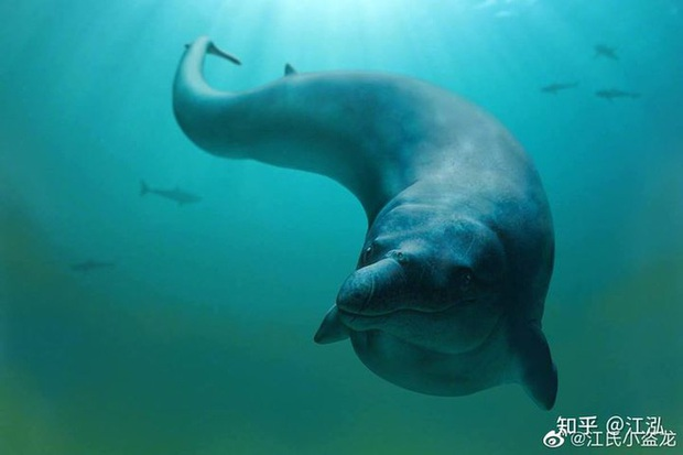 Tại sao lỗ mũi của cá voi lại nằm trên đỉnh đầu? - Ảnh 4.