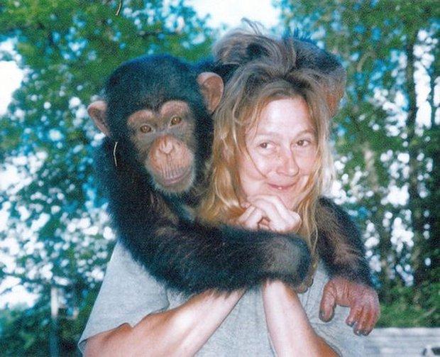 Chuyện về khỉ Travis: Sống như người suốt 14 năm bỗng 1 ngày điên cuồng cắn xé người thân, trước khi chết vẫn cố lê bước về giường của mình - Ảnh 2.