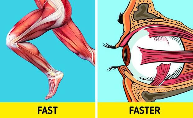 10 điều kỳ diệu mà cơ thể chúng ta có thể làm được, khiến bạn phải thừa nhận rằng thân thể mình chính là cỗ máy đỉnh cao nhất - Ảnh 8.