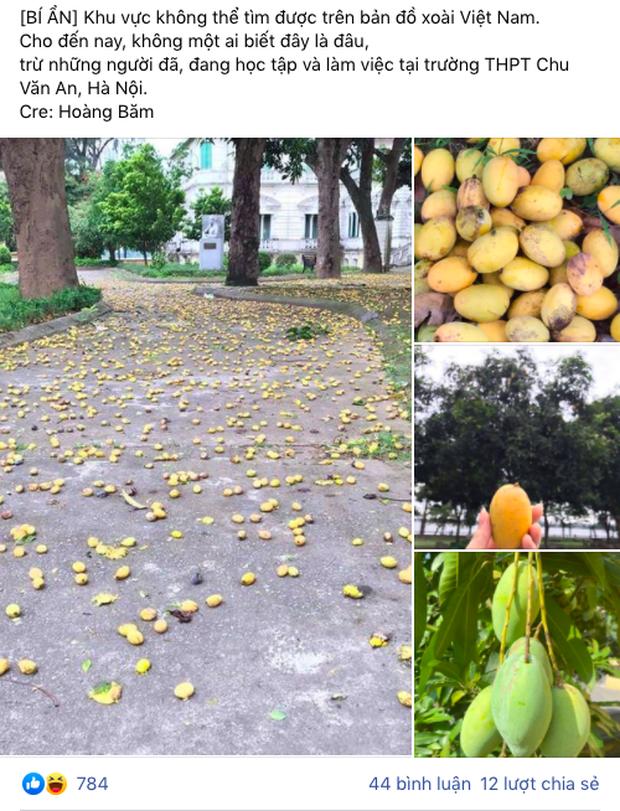 Cây xoài bí ẩn nhất Việt Nam: Quả chín rụng đầy gốc mà chẳng ai thèm nhặt, hoá ra mọc trong sân ngôi trường nổi tiếng này - Ảnh 1.