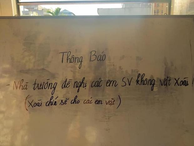 Cây xoài bí ẩn nhất Việt Nam: Quả chín rụng đầy gốc mà chẳng ai thèm nhặt, hoá ra mọc trong sân ngôi trường nổi tiếng này - Ảnh 5.