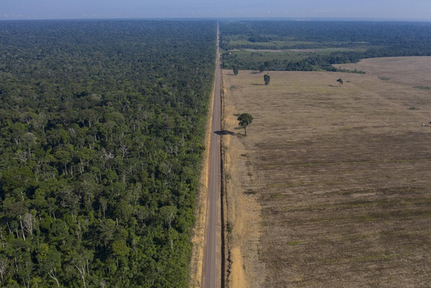 Kỷ lục 1.180km² rừng Amazon tại Brazil bị phá hủy trong tháng 5 - Ảnh 1.
