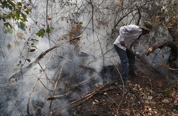 Kỷ lục 1.180km² rừng Amazon tại Brazil bị phá hủy trong tháng 5 - Ảnh 2.
