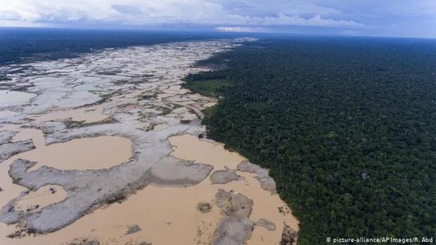 Kỷ lục 1.180km² rừng Amazon tại Brazil bị phá hủy trong tháng 5 - Ảnh 3.