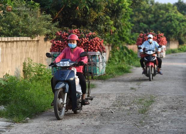 Ảnh: Công an huyện Lục Ngạn, Bắc Giang chung tay thu hoạch vải cùng bà con ngay từ đầu vụ - Ảnh 15.