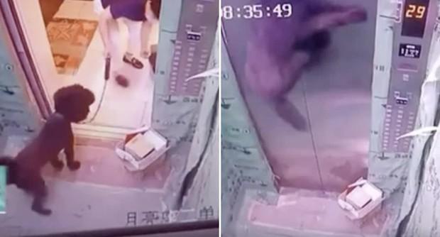 Video: Chủ dắt chó vào thang máy rồi bỏ quên nhưng vẫn cầm dây xích, chó cưng bị mắc kẹt treo cổ bên trong với cảnh tượng thót tim - Ảnh 2.
