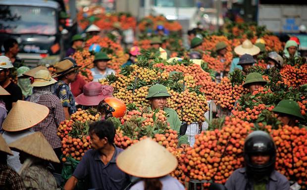 Vải thiều Việt Nam được nhiều quốc gia mê tít: Xuất khẩu hàng nghìn tấn, giá bán có thể lên tới 550k/kg - Ảnh 7.