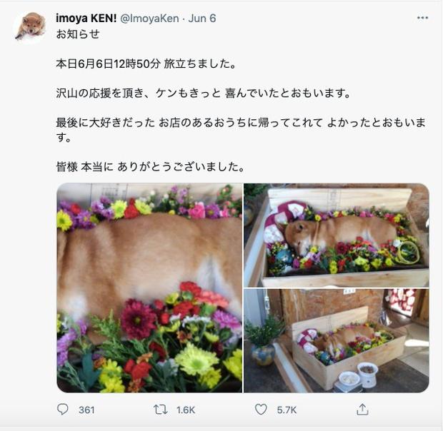 Chú chó Shiba bán khoai lang nướng từng gây bão MXH thế giới đã qua đời - Ảnh 8.