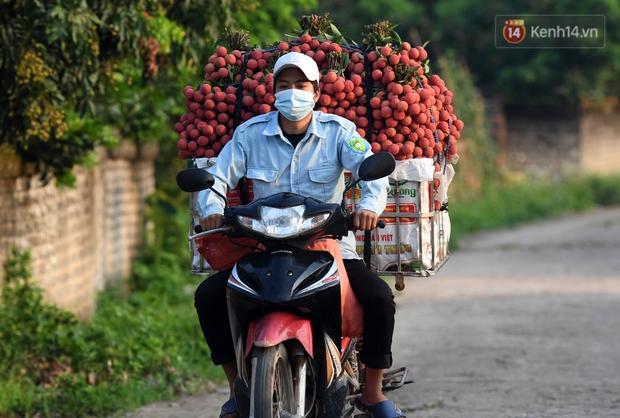 Vải thiều Lục Ngạn, Bắc Giang nhộn nhịp thu hoạch và tiêu thụ ngay từ đầu vụ - Ảnh 4.