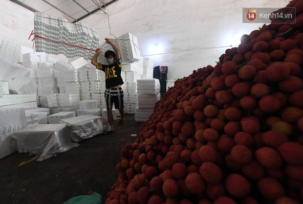 Vải thiều Lục Ngạn, Bắc Giang nhộn nhịp thu hoạch và tiêu thụ ngay từ đầu vụ - Ảnh 11.