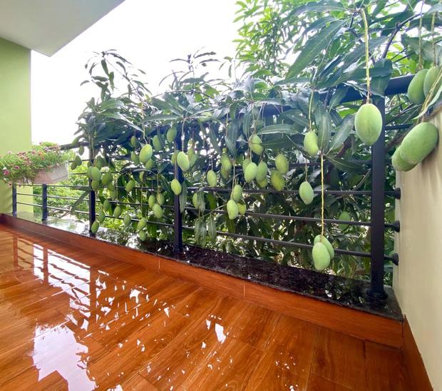 Cô hàng xóm may mắn nhất Việt Nam: Không trồng xoài nhưng vẫn có quả dâng tận miệng, mọc bên nhà mình thì là của mình rồi! - Ảnh 4.