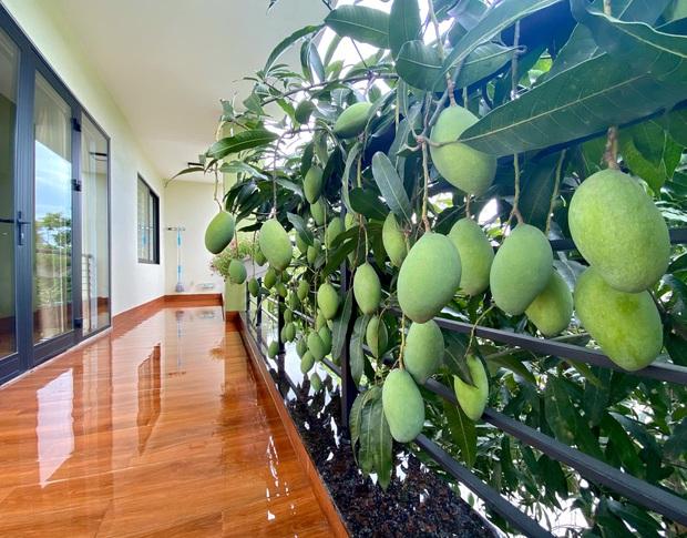 Cô hàng xóm may mắn nhất Việt Nam: Không trồng xoài nhưng vẫn có quả dâng tận miệng, mọc bên nhà mình thì là của mình rồi! - Ảnh 5.