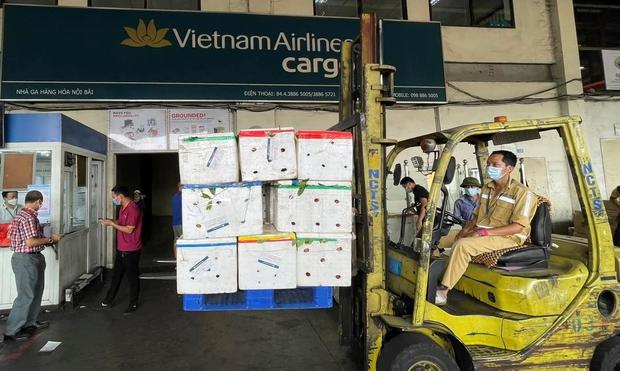 Bố trí riêng một siêu máy bay chở 40 tấn vải thiều Bắc Giang đi TP.HCM - Ảnh 2.