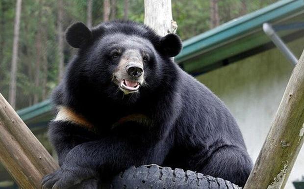Vụ bán 2 chi gấu bị phạt 700 triệu đồng, Trung tâm Giáo dục Thiên nhiên nói gì? - Ảnh 1.