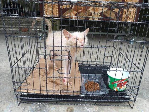 Tìm thấy cô mèo nhỏ đang hấp hối ở sân sau, cô gái mát tay chăm bẵm khiến con vật lột xác hoàn toàn sau 5 tháng - Ảnh 3.