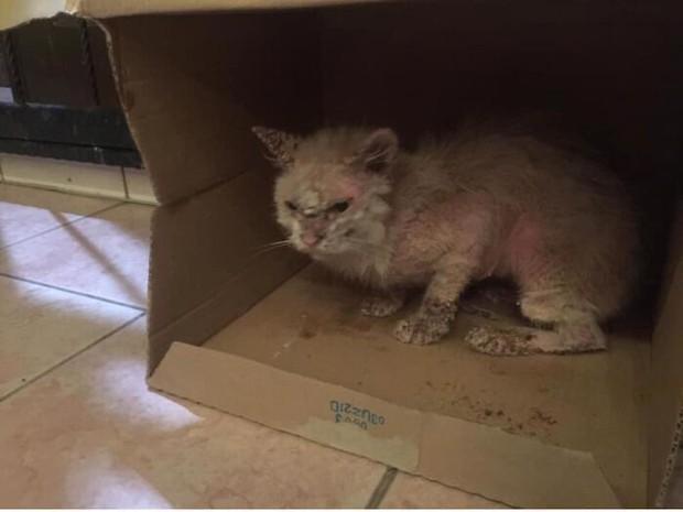 Tìm thấy cô mèo nhỏ đang hấp hối ở sân sau, cô gái mát tay chăm bẵm khiến con vật lột xác hoàn toàn sau 5 tháng - Ảnh 4.