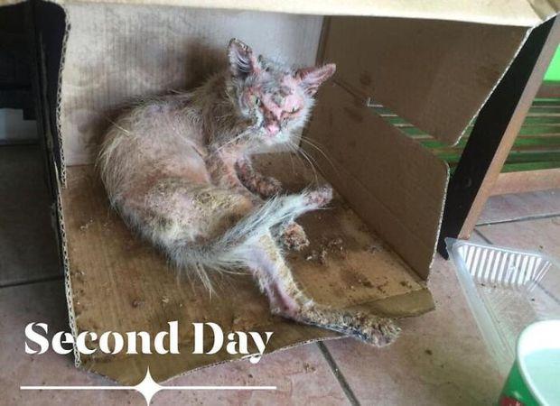 Tìm thấy cô mèo nhỏ đang hấp hối ở sân sau, cô gái mát tay chăm bẵm khiến con vật lột xác hoàn toàn sau 5 tháng - Ảnh 5.