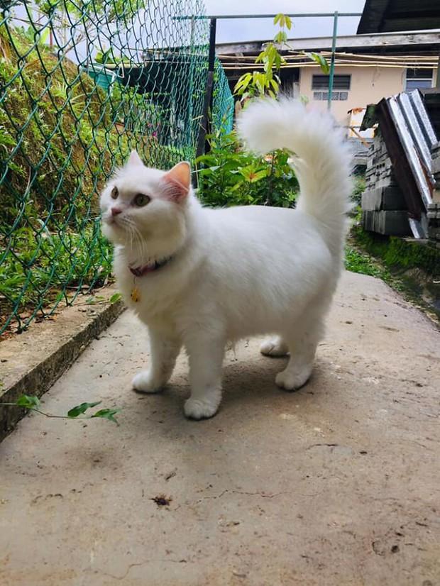 Tìm thấy cô mèo nhỏ đang hấp hối ở sân sau, cô gái mát tay chăm bẵm khiến con vật lột xác hoàn toàn sau 5 tháng - Ảnh 9.