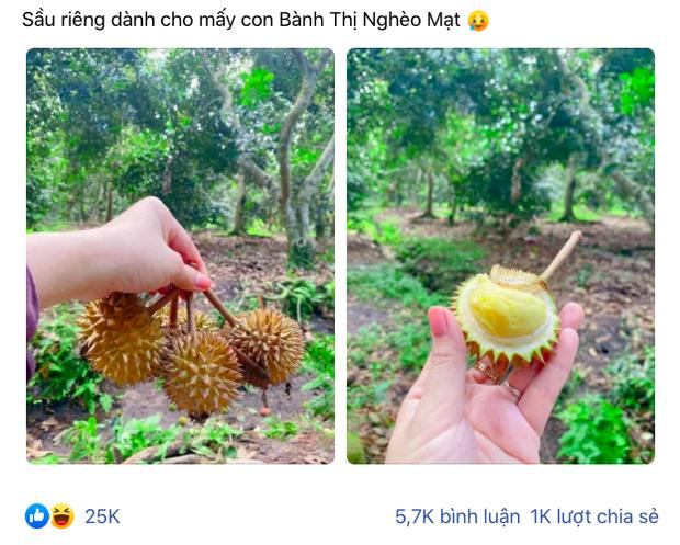 Trái sầu riêng tí hon nhất Việt Nam: Kích thước chỉ bằng một quả chôm chôm, xẻ ra bên trong đảm bảo ai cũng té ngửa - Ảnh 1.