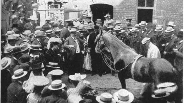 Đây là Hans - chú ngựa từng gây bão lịch sử nhân loại: Biết làm toán, nói được tiếng Đức và có một cái kết buồn - Ảnh 2.