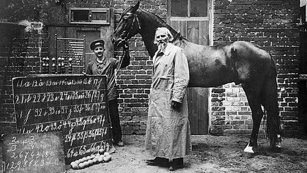 Đây là Hans - chú ngựa từng gây bão lịch sử nhân loại: Biết làm toán, nói được tiếng Đức và có một cái kết buồn - Ảnh 1.