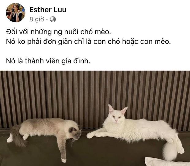 Hari Won bị chỉ trích gay gắt vì đăng status giữa ồn ào cô gái đưa mèo đi khám thú y, phải lên tiếng ngay và luôn! - Ảnh 2.