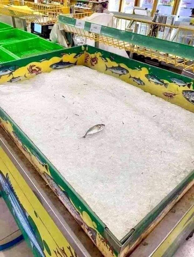 Chú cá cô đơn nhất trong siêu thị mùa dịch, ai nhìn qua cũng thương nhưng đành lắc đầu bỏ đi - Ảnh 1.
