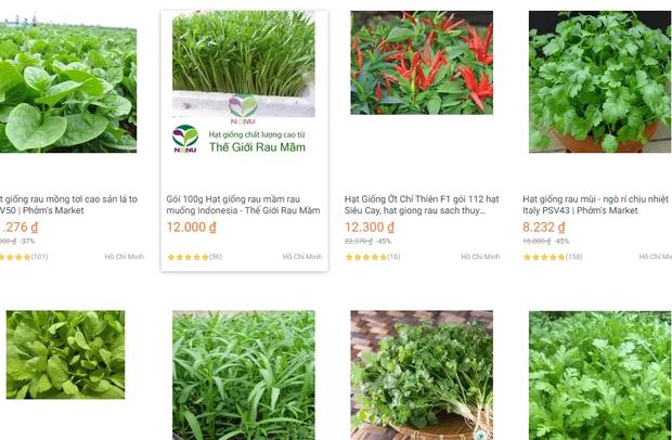 Bắt chước Tóc Tiên mua hạt giống về tự trồng rau, vừa vui vừa tha hồ rau sạch ăn hàng ngày - Ảnh 2.