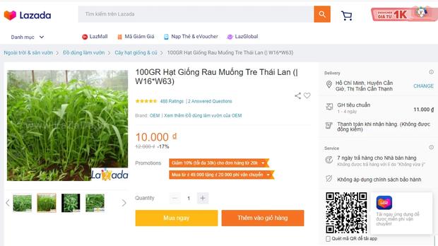 Bắt chước Tóc Tiên mua hạt giống về tự trồng rau, vừa vui vừa tha hồ rau sạch ăn hàng ngày - Ảnh 5.