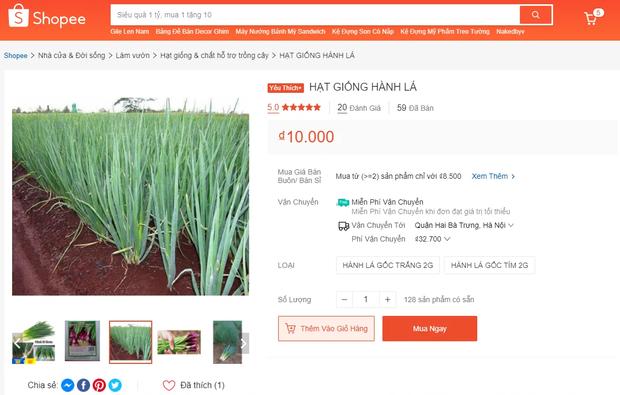 Bắt chước Tóc Tiên mua hạt giống về tự trồng rau, vừa vui vừa tha hồ rau sạch ăn hàng ngày - Ảnh 7.